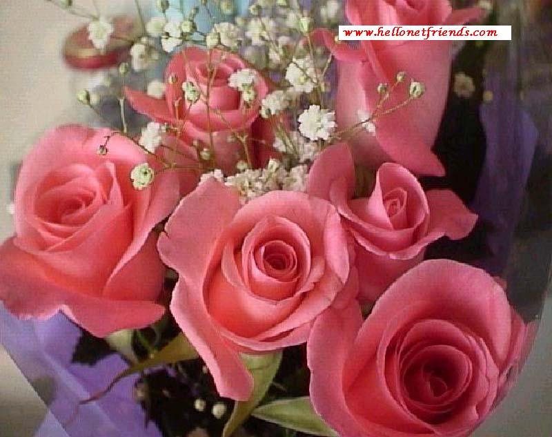Beautiful Roses : Size( 71.4 kb)